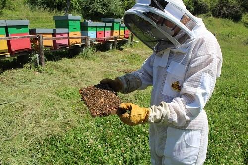veleno-dapi-lunezia-veleno-d'api-puro-veleno-d'api-prezzo