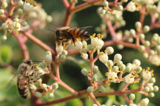 miele-biologico